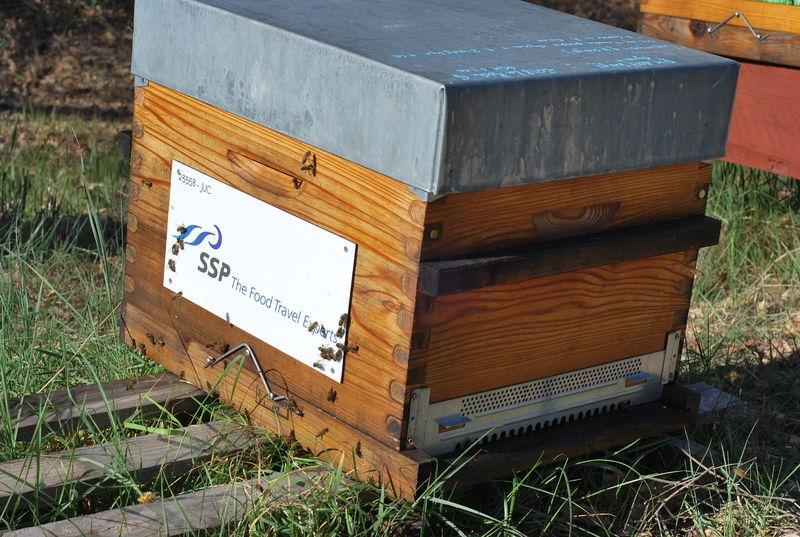 La ruche SSP