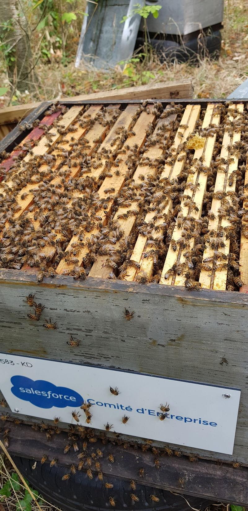 La ruche Comité d