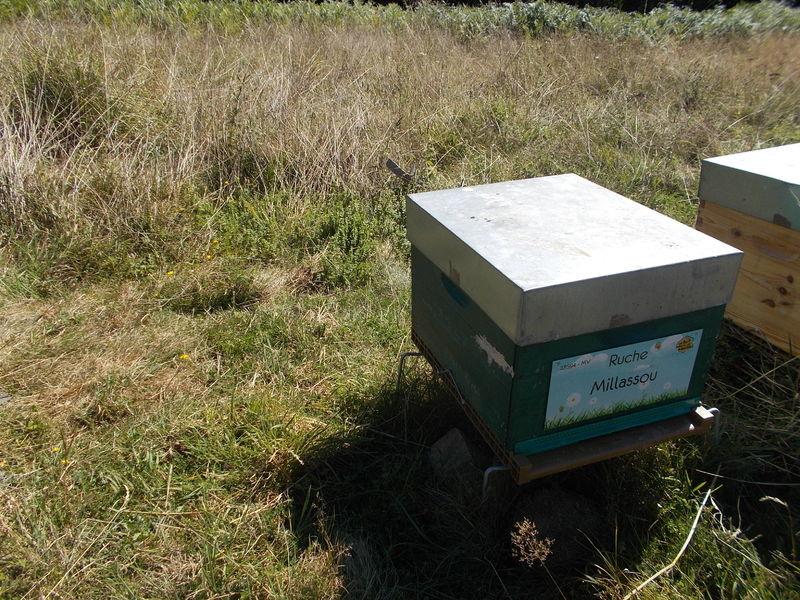 La ruche Millassou