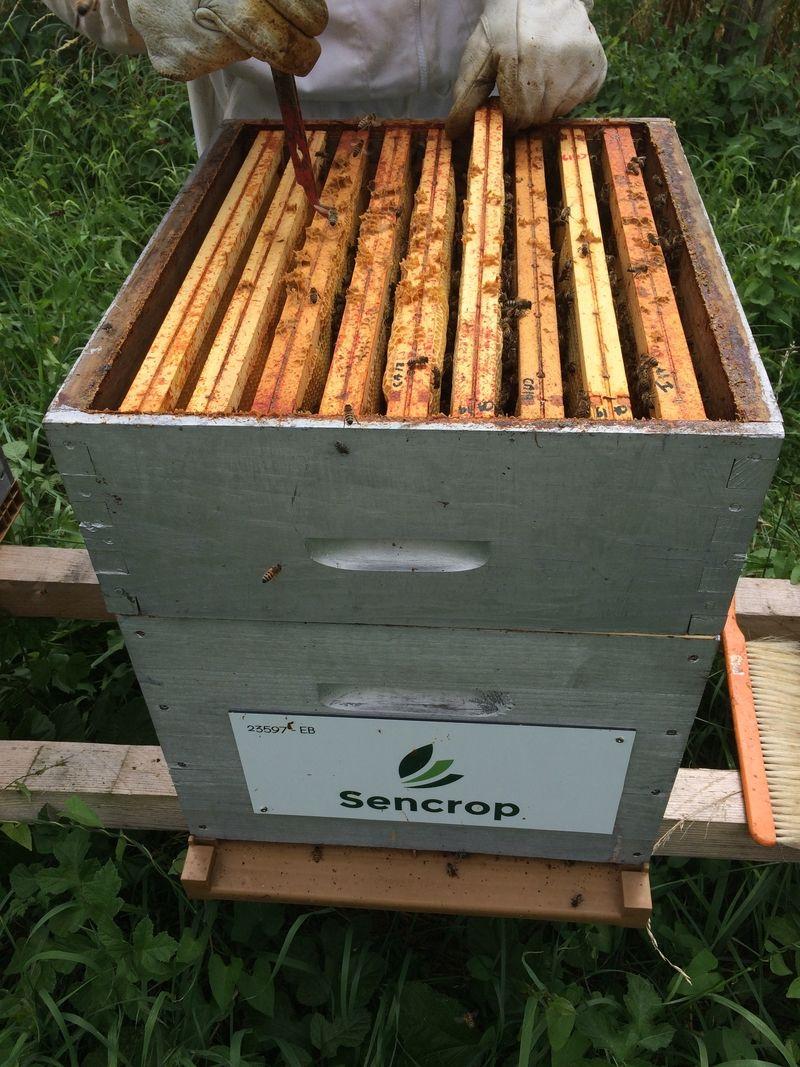 La ruche SENCROP