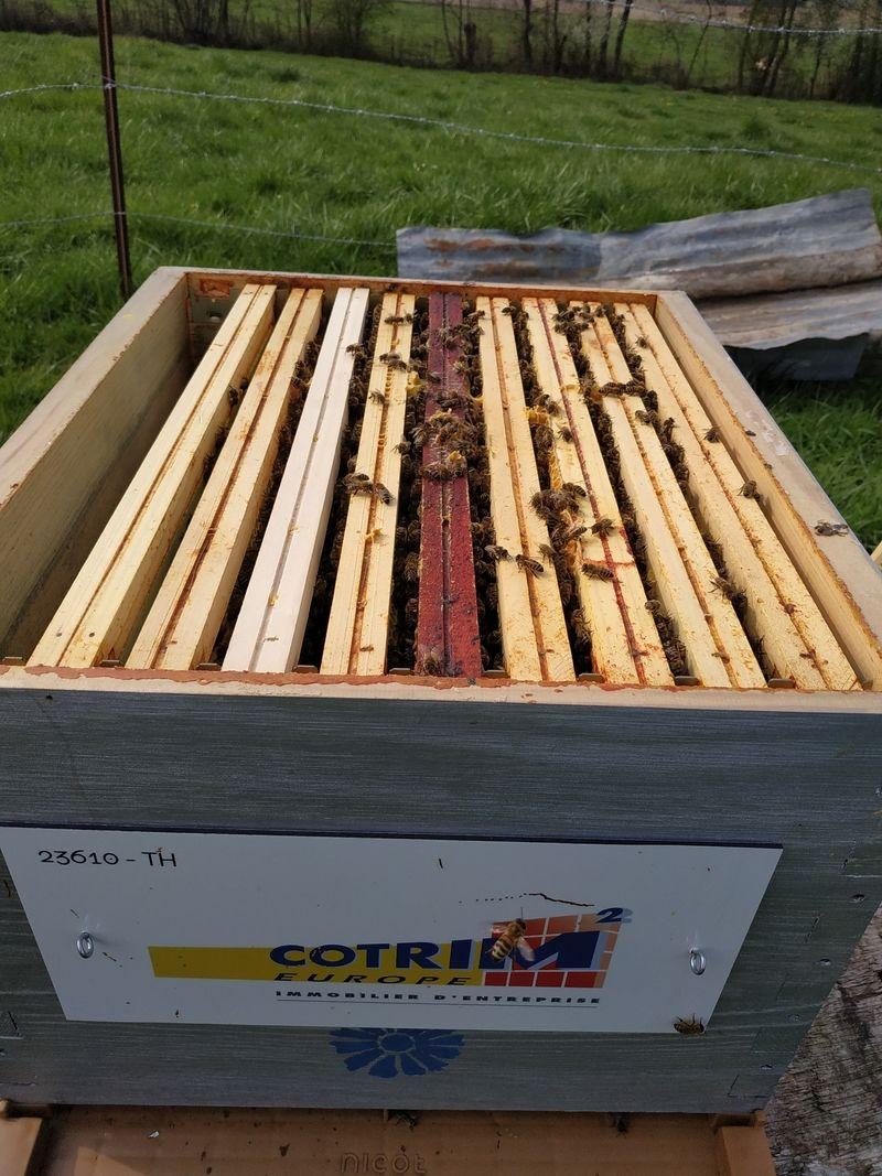 La ruche Cotrim