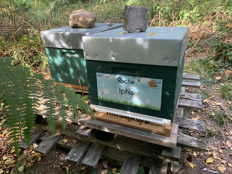 La ruche Iphis