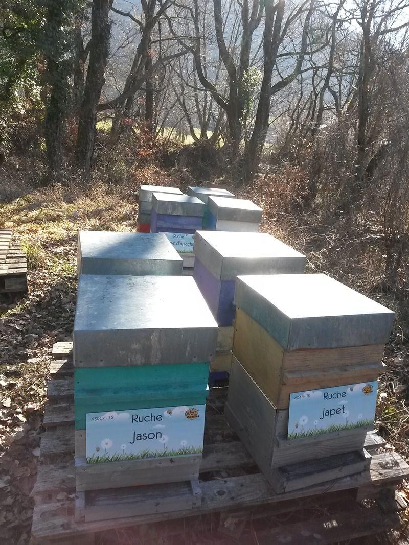 La ruche Jason