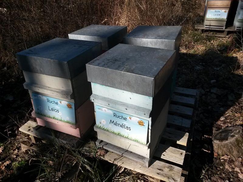 La ruche Laïos