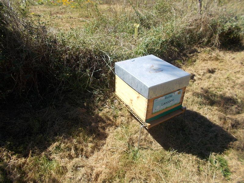La ruche Laocoon