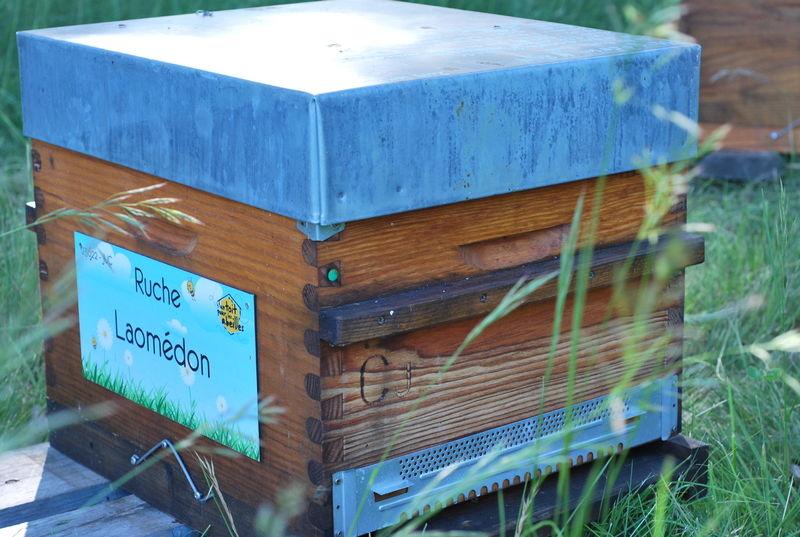 La ruche Laomédon