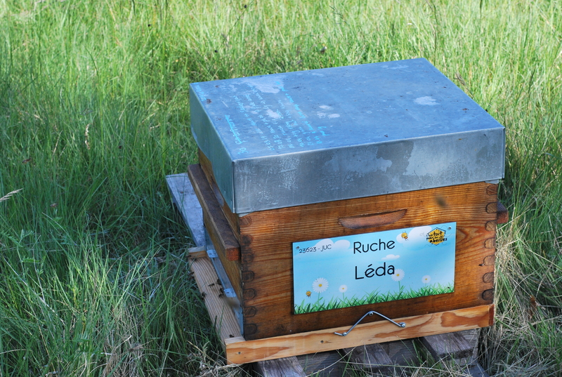 La ruche Léda