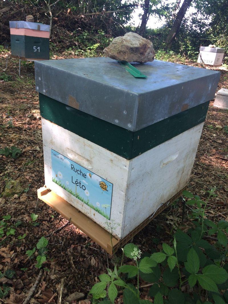 La ruche Léto