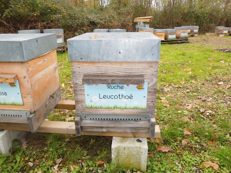 La ruche Leucothoé