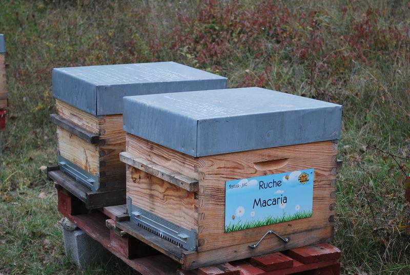 La ruche Macaria