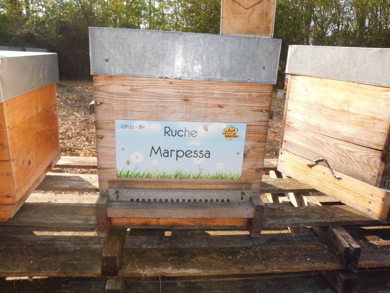 La ruche Marpessa
