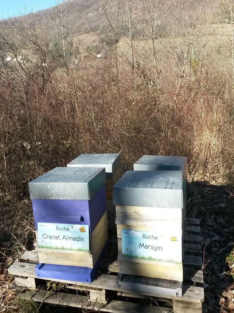 La ruche Marsyas