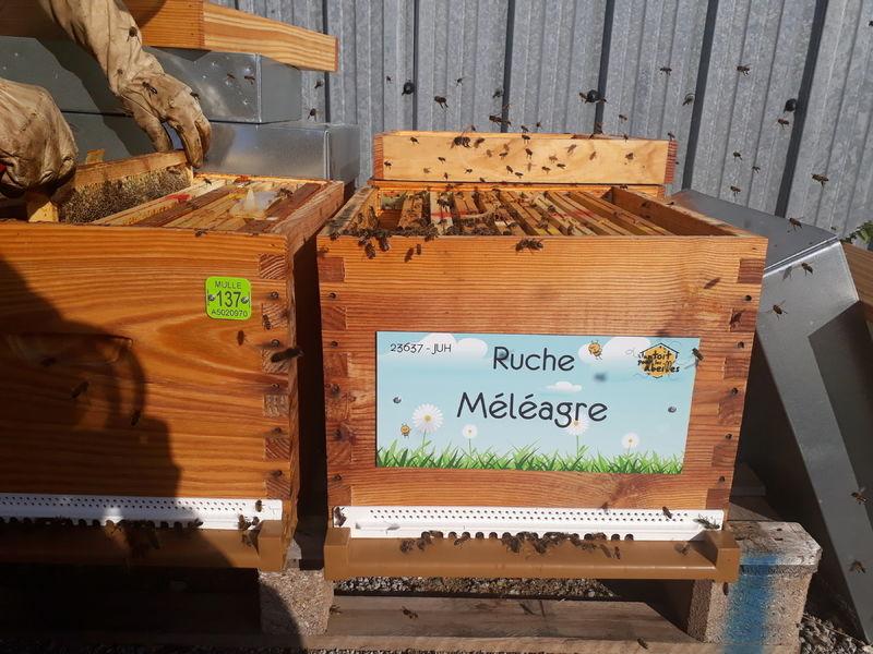 La ruche Méléagre