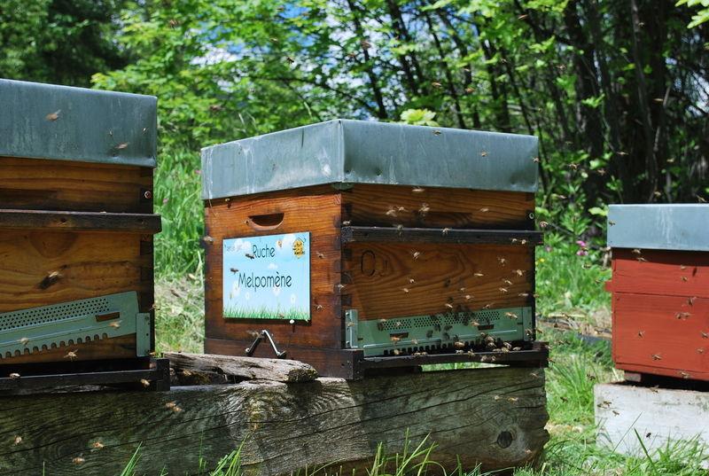 La ruche Melpomène