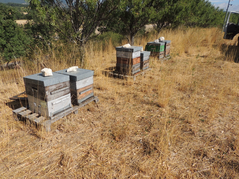 La ruche SONNEDIX ELECSOL PROVENCE