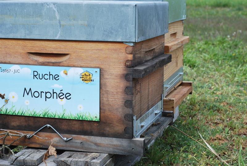 La ruche Morphée