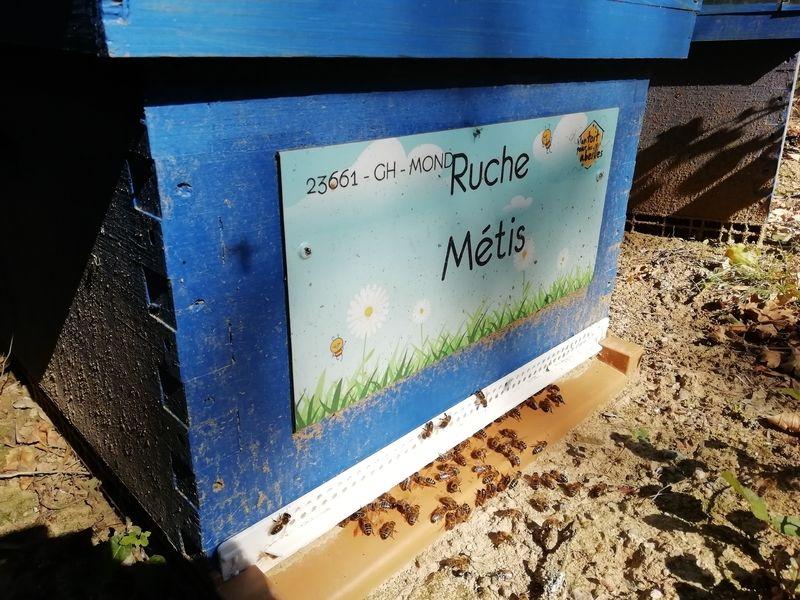 La ruche Métis