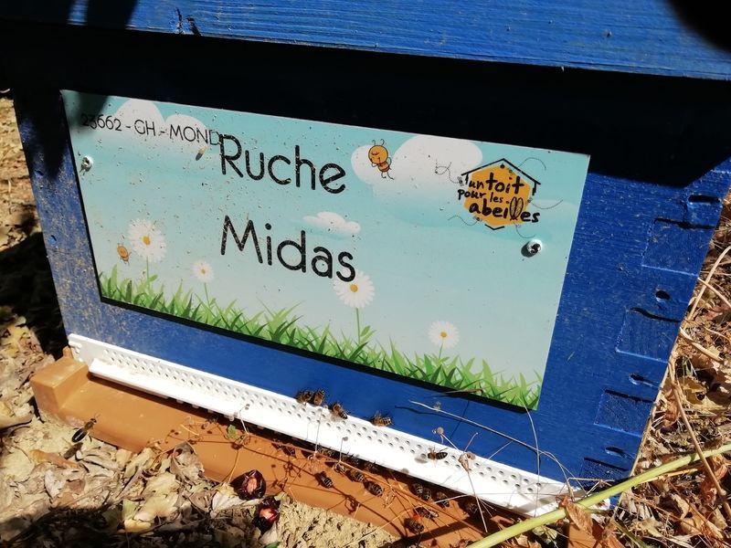 La ruche Midas