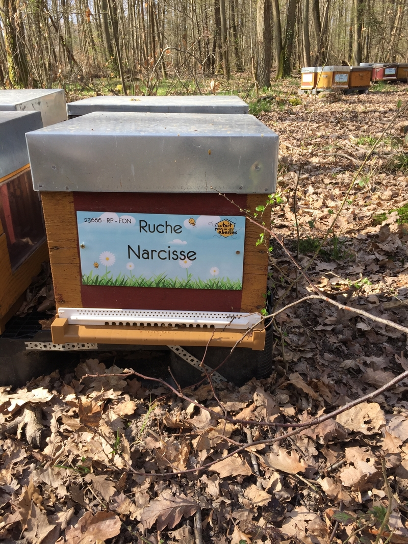 La ruche Narcisse