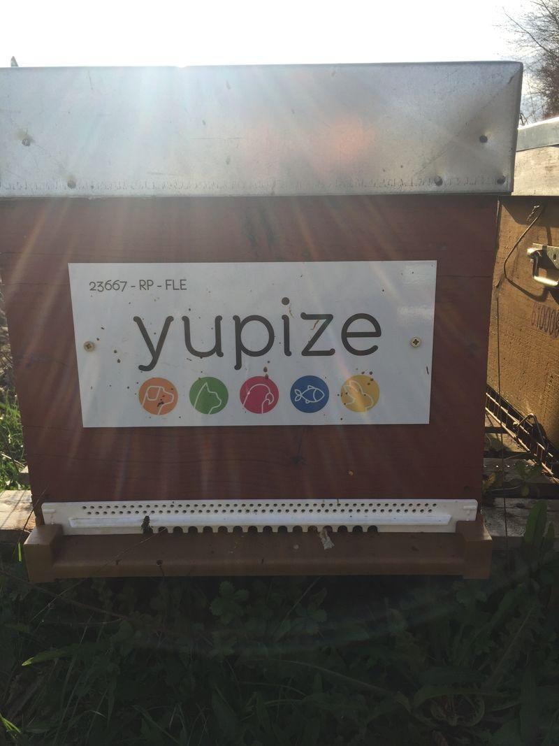 La ruche YUPIZE