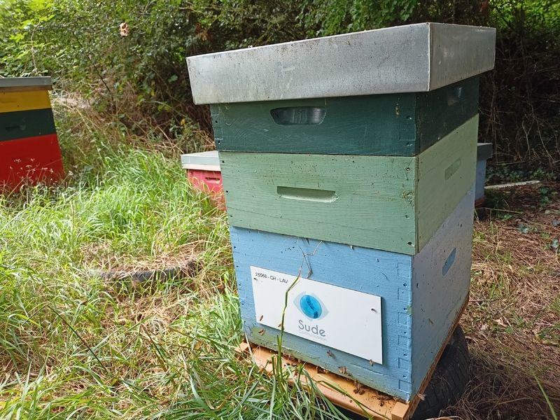 La ruche SUDE COMMUNICATION