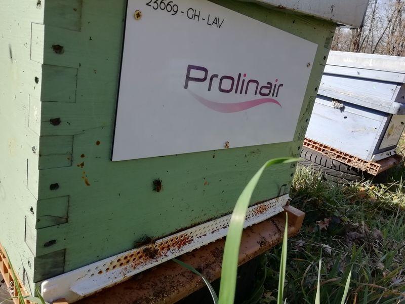 La ruche Prolinair