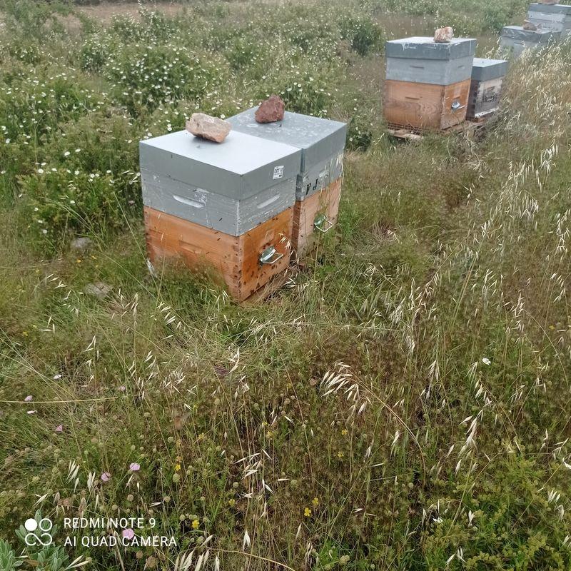 La ruche SONNEDIX SOLEOL I