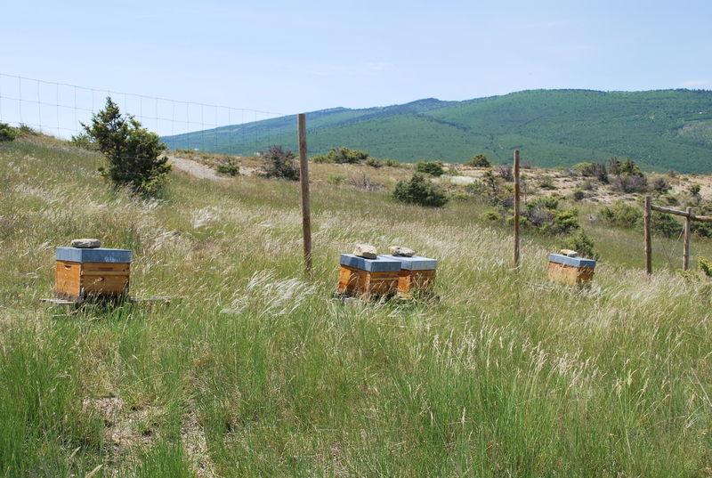 La ruche SONNEDIX LAVANSOL M1