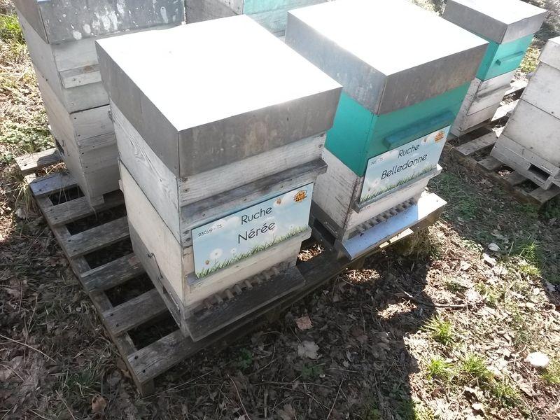 La ruche Nérée