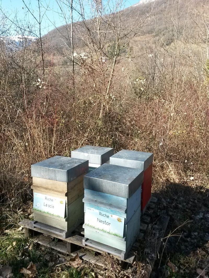 La ruche Nestor