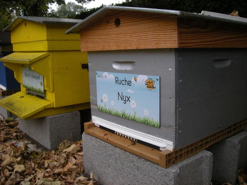 La ruche Nyx