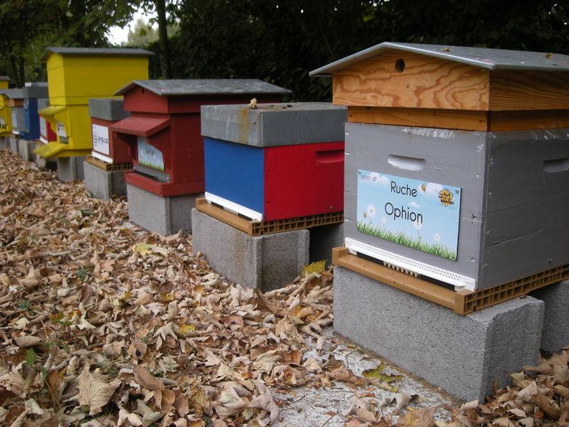 La ruche Ophion
