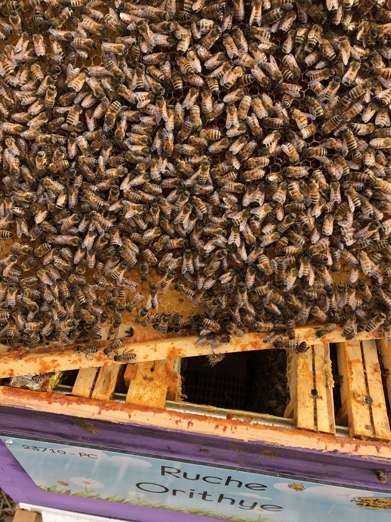 La ruche Orithye