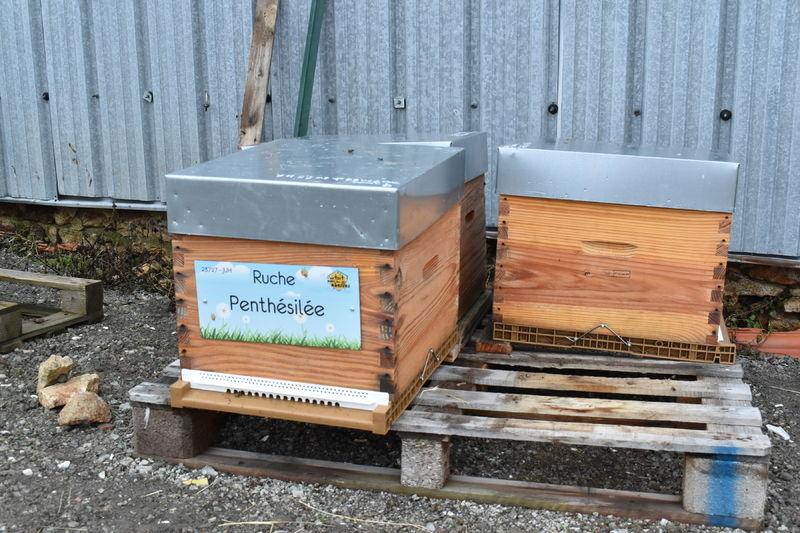 La ruche Penthésilée