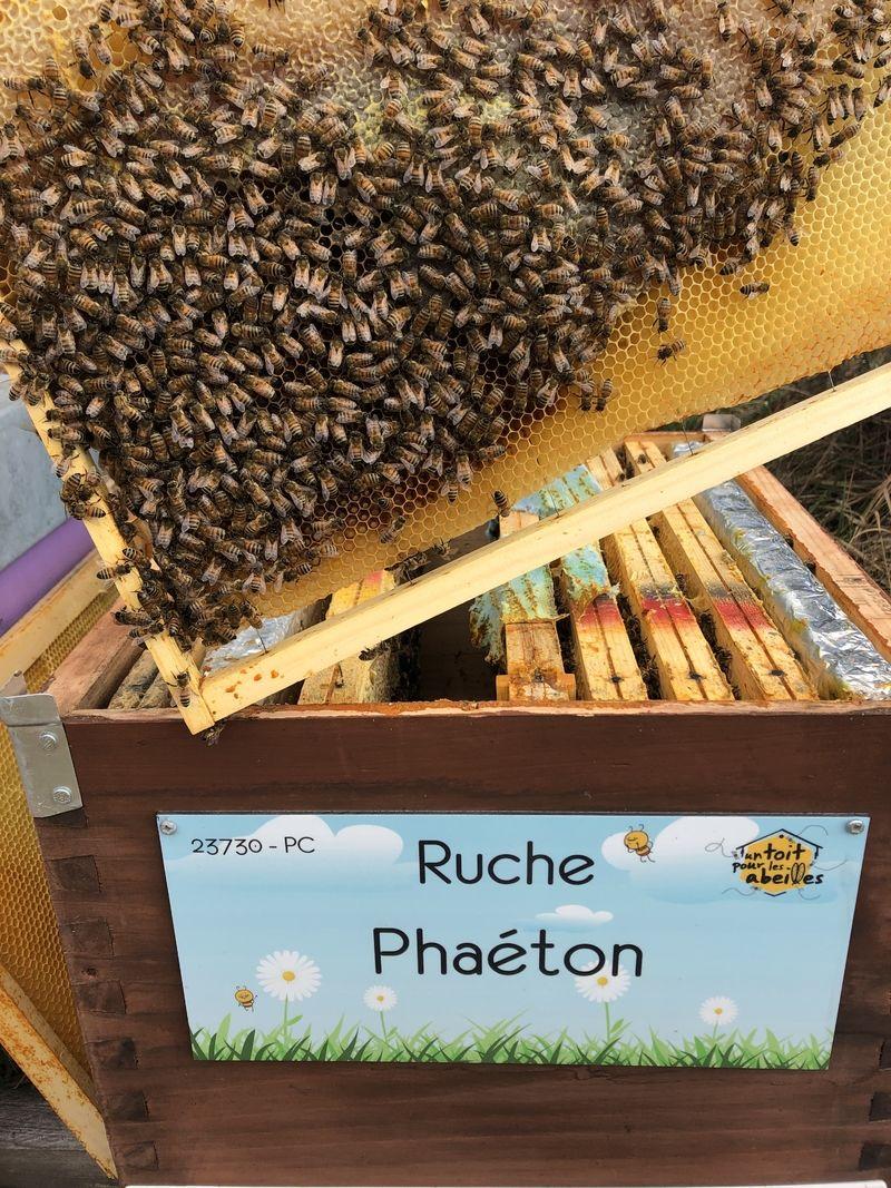 La ruche Phaéton