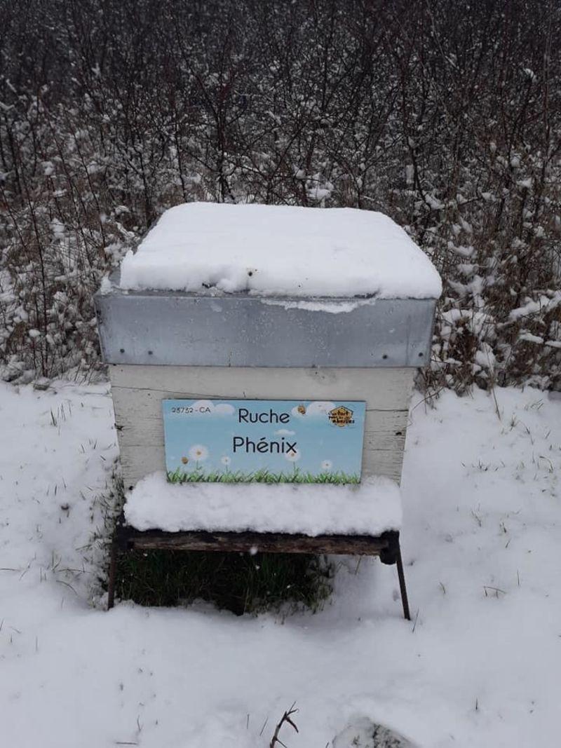La ruche Phénix