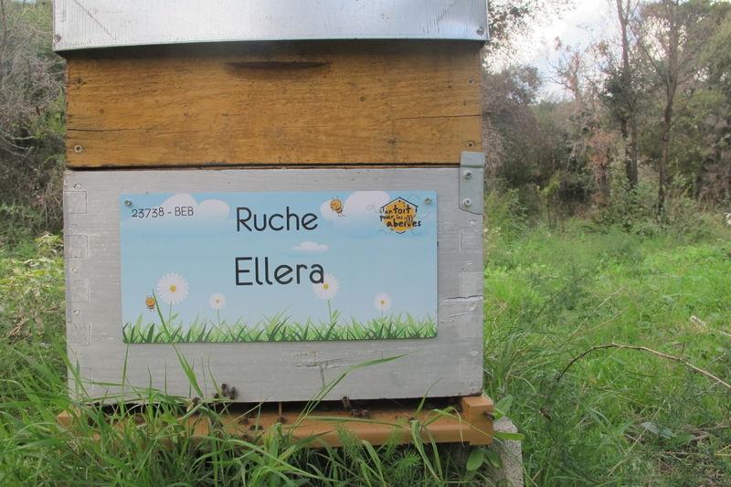 La ruche Ellera