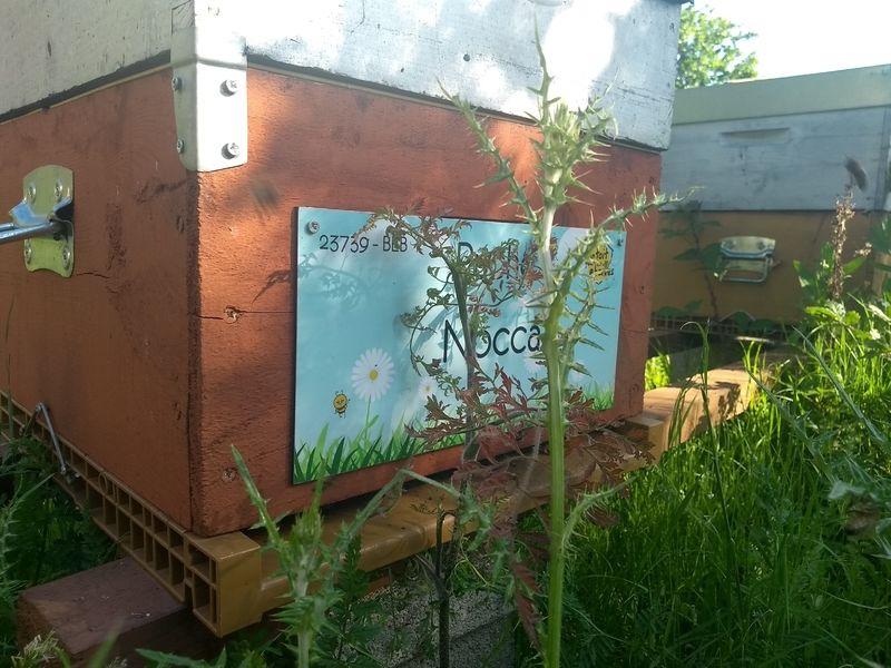 La ruche Nocca