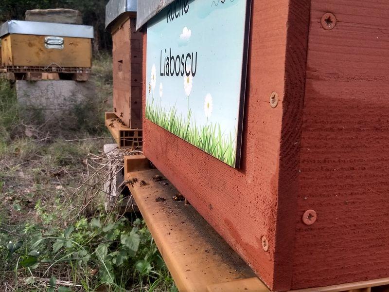 La ruche Liaboscu
