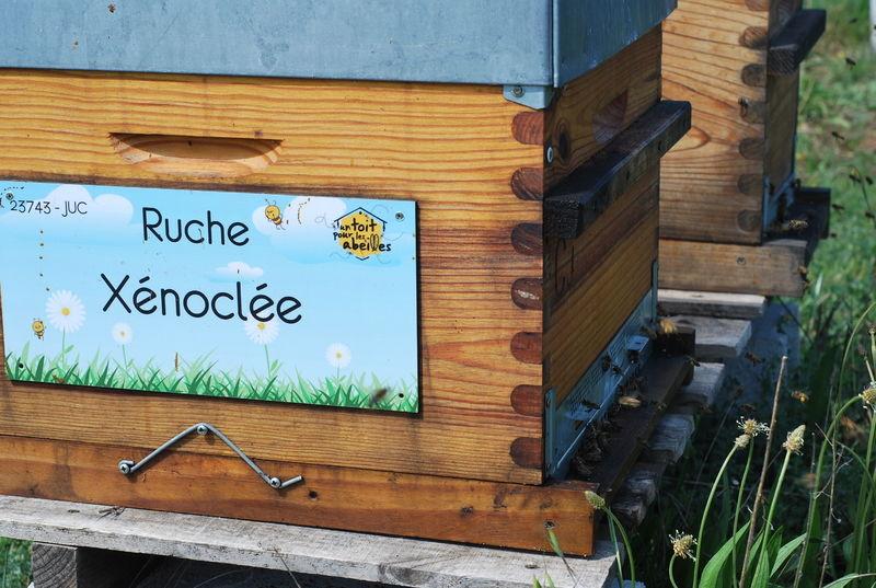 La ruche Xénoclée