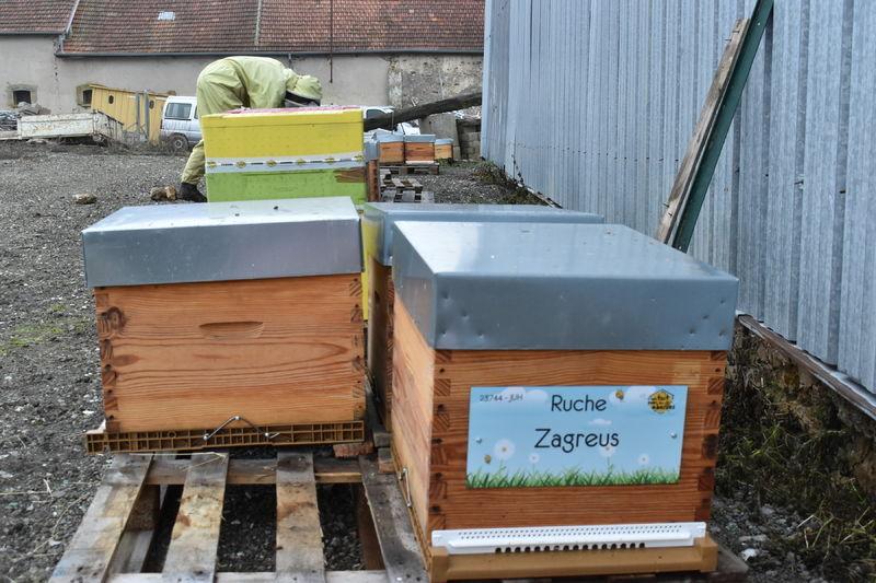 La ruche Zagreus