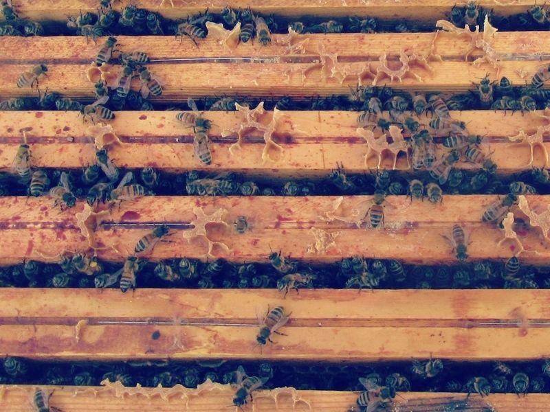 La ruche Zéthos