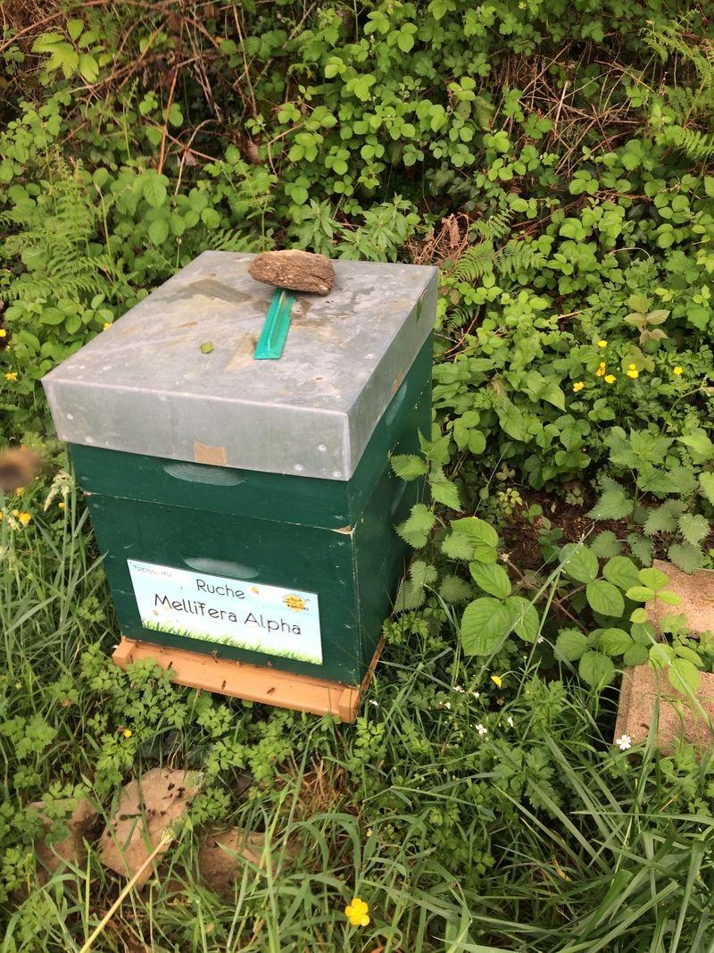 La ruche Mellifera Alpha