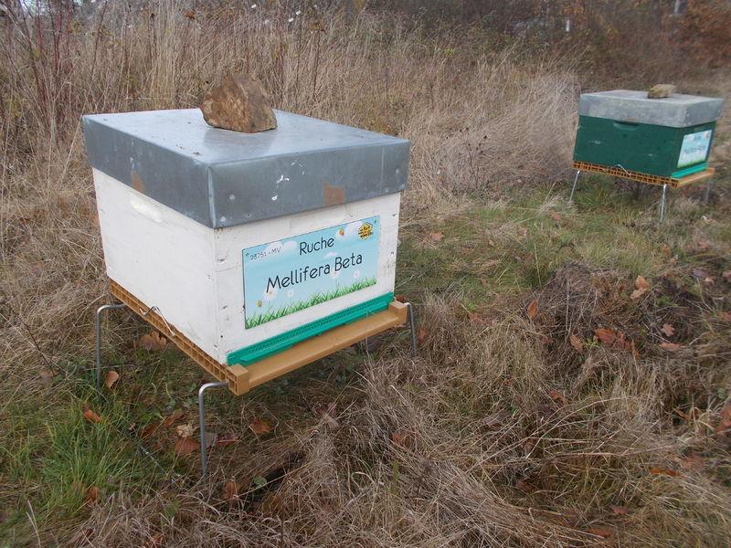 La ruche Mellifera Beta