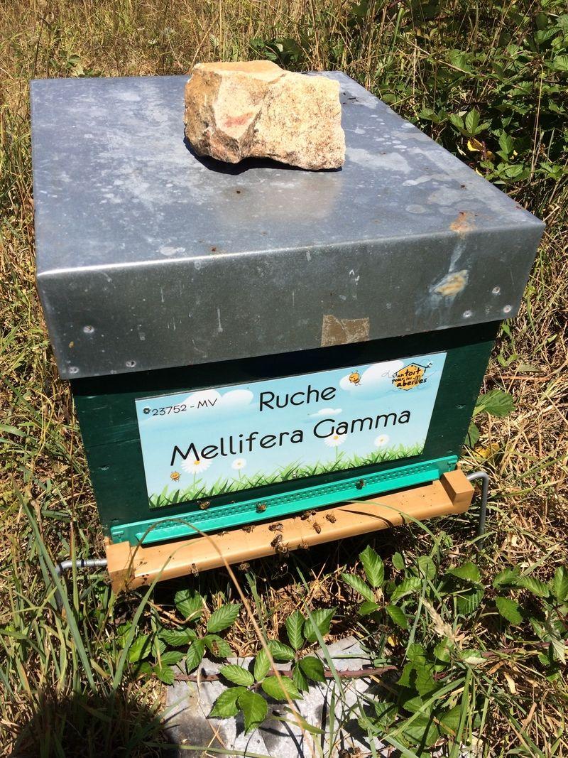 La ruche Mellifera Gamma