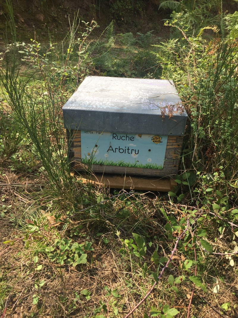 La ruche Arbitru