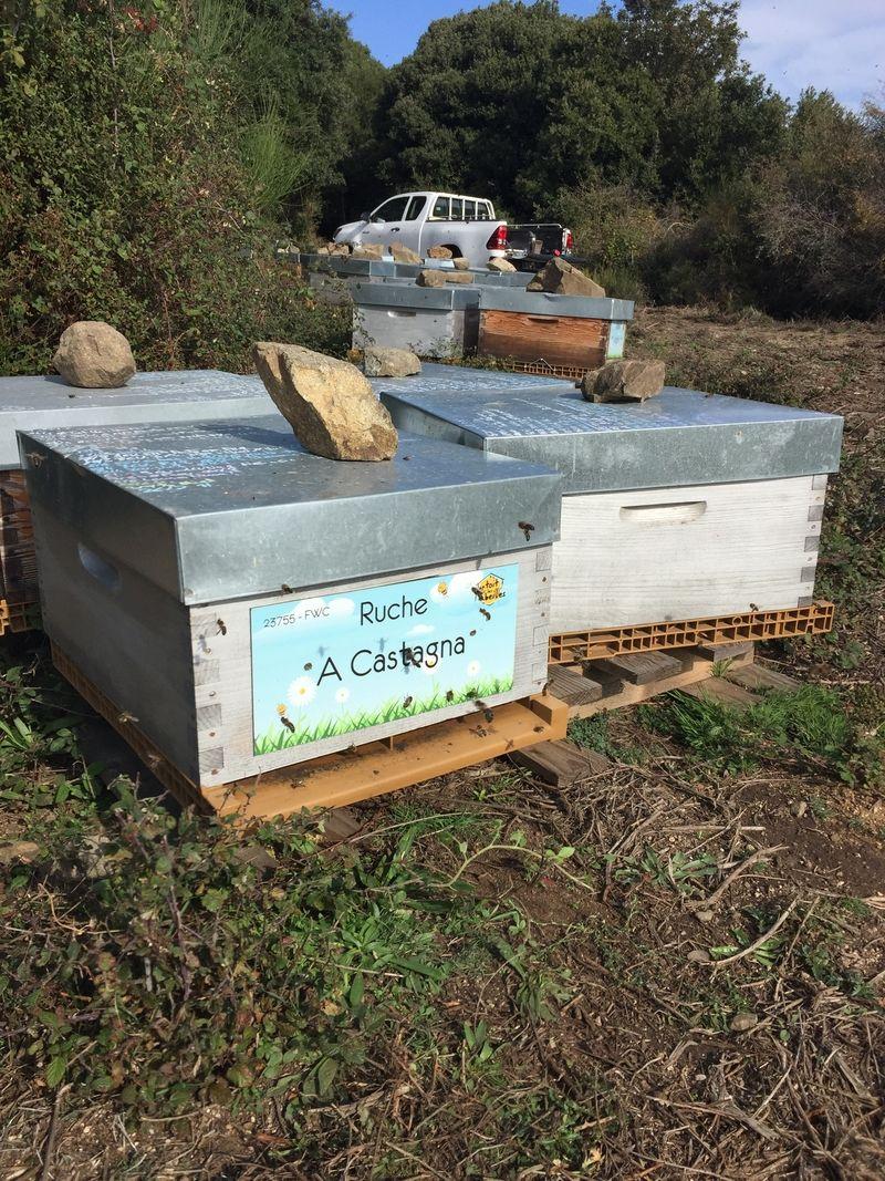 La ruche A Castagna