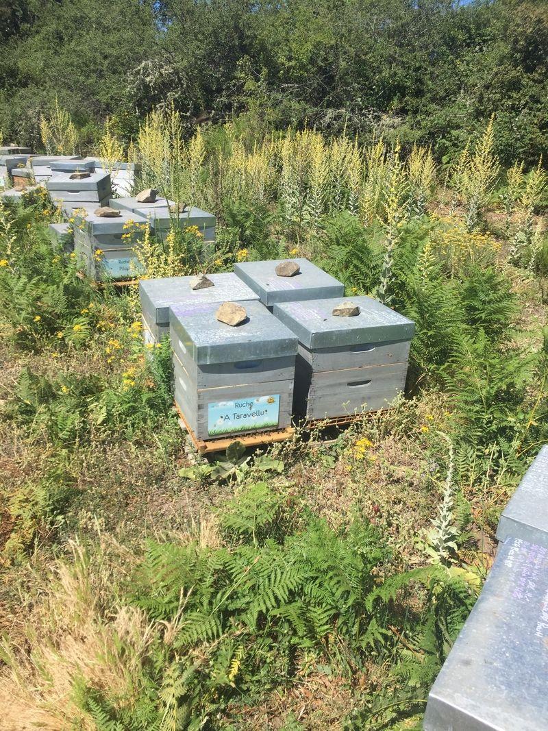 La ruche A Taravellu