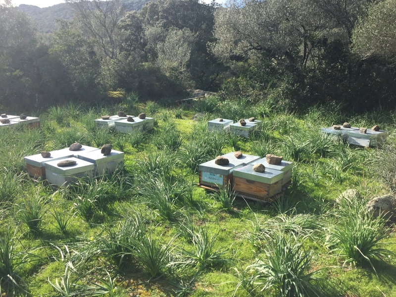 La ruche A Nebida