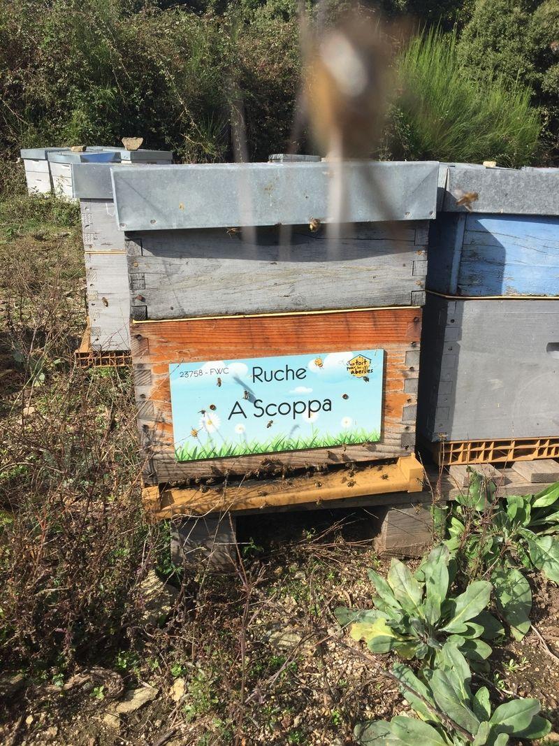 La ruche A Scoppa